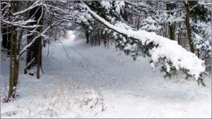 Winter Snow Path ... where does it lead? Write about it!
